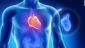 fisiologia_coração.jpg