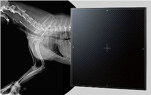 Vet X-Ray.jpg