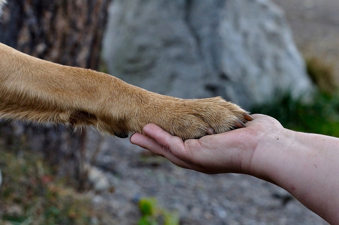 Love Connections Strengthen Animal-To-Human Bonds