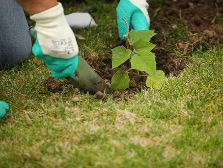 Reforestación y Gestión de Residuos en Las Rozas