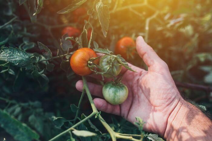 retirada de poda en huertos orgánicos