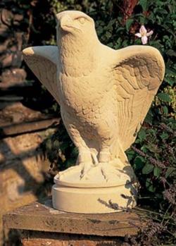 Peregine Falcon - haukka