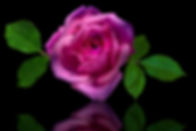 Droplet rose reflection on black.jpg
