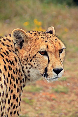 15. Stunning wildlife South Africa has t