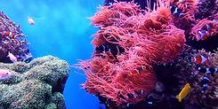 #1 Great Barrier Reef.jpg