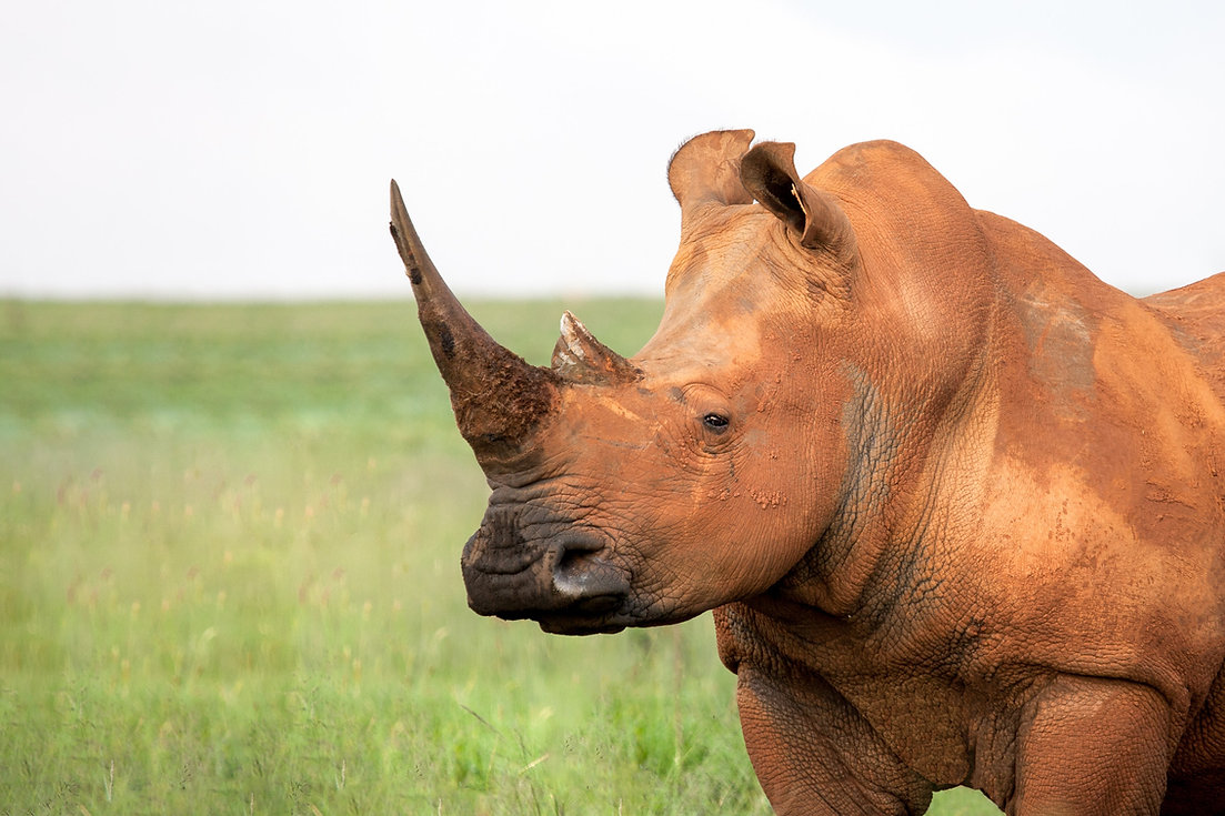 3.  One of the top Safari destinations .