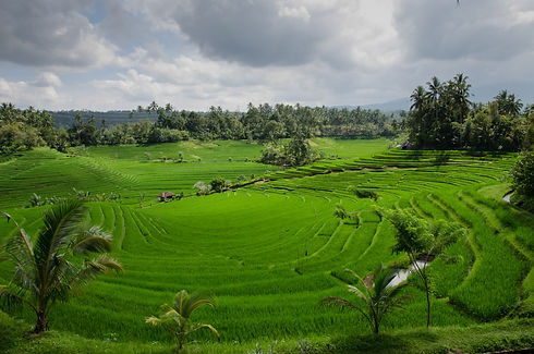 12. Rice fields fun fact and great for p