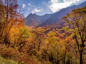Fall Leaf Peeping Ideas