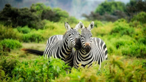 10 Reasons to Use a Travel Advisor for African Travel