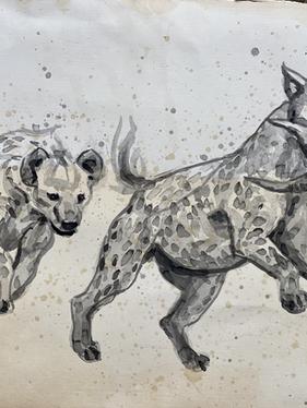 Hyena Study #7