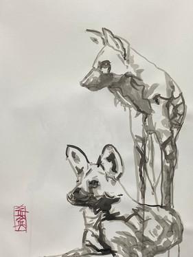 Wild Dog Study #3