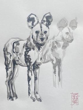 Wild Dog Study #4