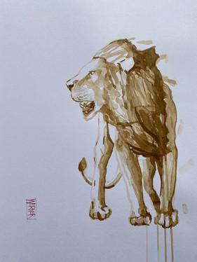 Lion Study #4
