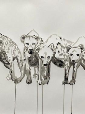 Hyena Study #3