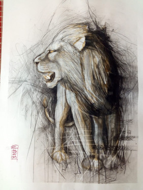 Lion Study #2