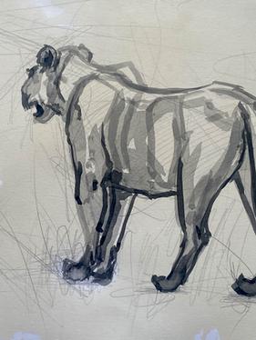 Lion Study #1