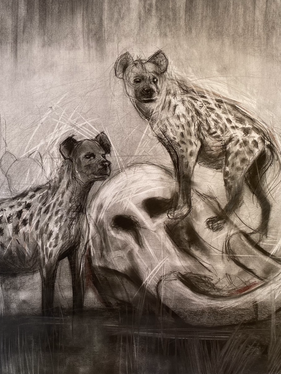 Hyena Study #1