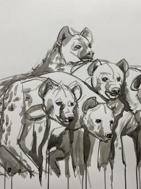 Hyena Study #2