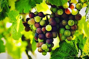 grapes-1246531_960_720_edited.jpg