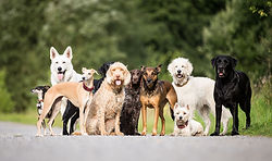 Aufmacher Hunde BK5Q8806.jpg