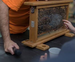 Very attentive children observing the work of the bees in their honeycomb with the interes