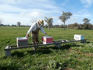 beekeepingService.JPG