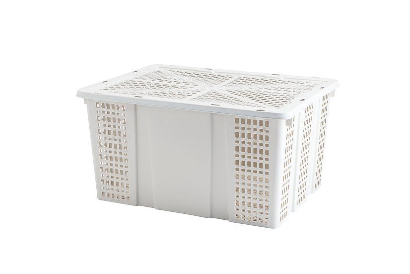 ตะกร้าลองกอง / Fruit Basket (Longkong)
