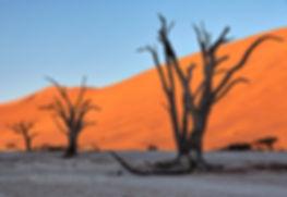 Deadvlei at sunrise, Namibia - landscape077