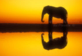 Elephant reflection and silhouette, Gemsbokvlakte, Etosha, Namibia - elephants001