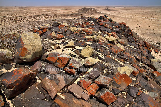 Lichen fields north of Swakopmund: landscape040