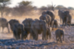 Elephants gather at a waterhole, Etosha, Namibia - elephants096