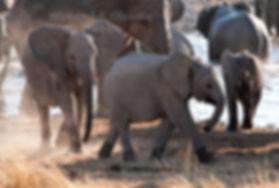 Elephant calfs at waterhole, Etosha, Namibia - elephants049