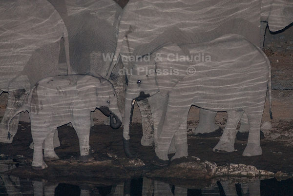 Elephants drinking at night, Etosha: elephants109