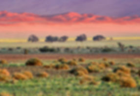 Early morning in the Namib: landscape028