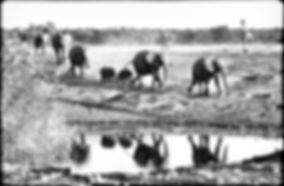 Elephants gather at a waterhole, Etosha, Namibia _ Black-White026