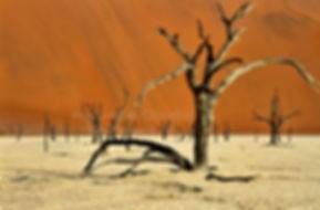 Deadvlei, Namib Desert: landscape007