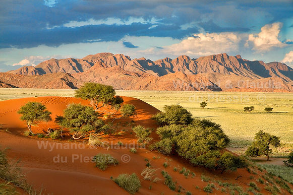 Elim dune & Naukluft mountains: landscape032