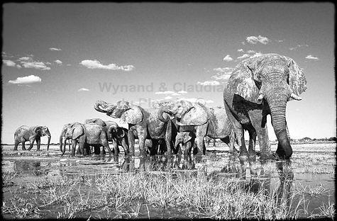 Gentle giants, Etosha, Namibia _ Black-White010