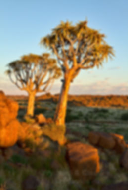 Quiver trees at the Giant's Playground, southern Namibia: landscape075