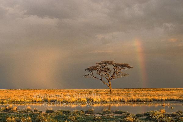 Rainy season in Etosha: landscape014