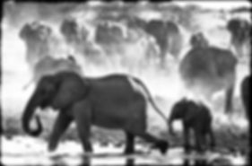 Elephant herd gathers at a waterhole, Etosha, Namibia _ Black-White022
