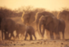 The big rush - Elephants running to a waterhole, Etosha, Namibia - elephants013