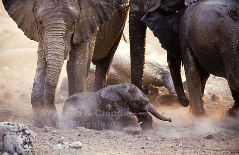 Elephant baby dust bathing, Etosha, Namibia - elephants074