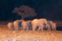 Elephant herd at Okaukuejo waterhole at night, Etosha: elephants110