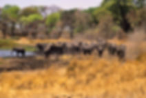 Elephant herd in the Mahangu Game Reserve, Caprivi, Namibia: elephants160