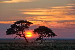 Sunrise in Etosha, Namibia: landscape025