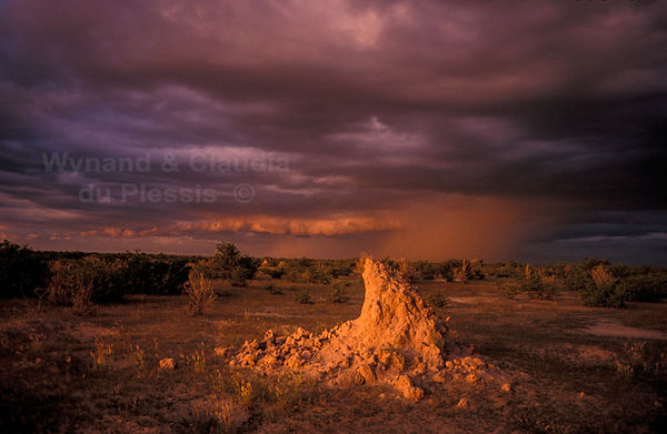 Termite hill and rain storm in Etosha: landscape069