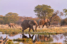 Elephants at Goas waterhole, Etosha, Namibia - elephants076
