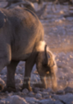 Elephant baby with herd, Etosha, Namibia - elephants015