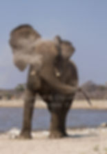 Elephant bull shakes his ears in anger, Namibia - elephants085